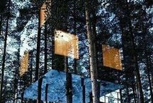 Dream Tree Houses / Peaceful, tranquil and self sufficient tree homes ideas to invest in Colorado.