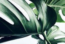 Botanicals / Inspired by beautiful leaves and indoor plants