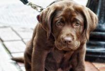 Honden / Honden