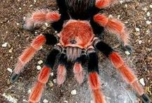 Spinnen / Spinnen
