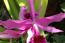 orchideeën / orchideeën