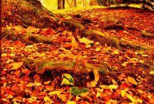 Herfst / Herfstkleuren in al zijn schoonheid.