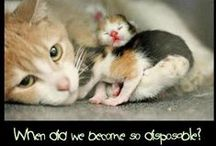 Sharing Spay/Neuter Messaging / See also our photo albums on Facebook https://www.facebook.com/spayship