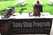 Tabling for Spay/Neuter / Sharing some ideas