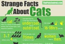 Cat Infographics / Disclaimer: Pinning an infographic here does not imply that the information has been verified by any of the Board's contributors.