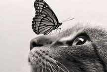 Cats :D