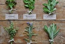 Magical Herbs / magical herbs, healing herbs
