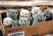 GATTI CANI CONIGLI ECC / ABOVE ALL I LOVE CATS BUT ALSO OTHER ANIMALS
