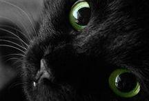 ★☪☀ Black Cat ★☪☀ / by J.R.W.-M.