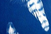 Sun Printing - Cyanotype /  If you are interested in a Cyanotype (sun print) workshop email-linda@creativethreadworkshops.co.uk