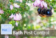 Bath Pest Control / Bath pest control - helping solve pest problems in Bath and the surrounding areas.