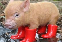 I love, pigs ( the animals), felt, and lots of other stuff.... / All kind of things which I like, such as....
