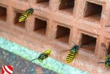 Wasps / Get rid of wasps and hornets nests in Bristol and Bath: https://www.waspkilluk.co.uk/wasp-control-removal.html