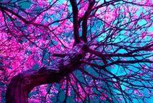 Color !!  / POP !!