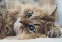Cute Animals / by Aki Okamoto