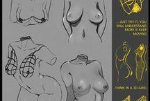 Female Anatomy