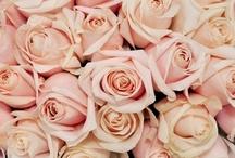 English Rose-Tinted