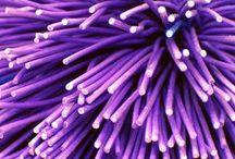 Purple Haze  / A wish list of our favourite Amethyst jewels