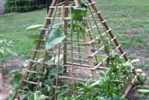 Vegetable garden / Tips and ideas to grow vegetables better