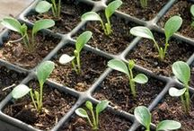 seeds, seed trays and seedlings / Seed planting and ways to store old seeds etc. Also how to care for seedlings