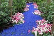Beautiful gardens / Dream gardens