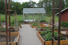 Terraced Vegetable gardens / Ideas how to terrace a veggie garden