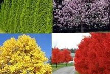 Trees / Ideas for colourful trees that I want