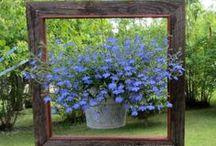 Hanging baskets / Novel ideas for hanging baskets and plants that can be grown in them