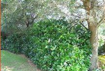 small shrubs and hedge pants