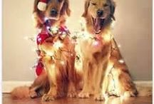 Holidays / all holidays, pictures how to,decorations