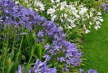 Miss Lynn Batcher design ideas- Schonenberg / -Plants legend