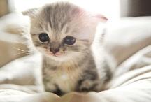 I love baby animals! / by Kim Childers