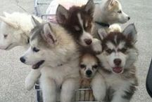 """Adorable Dogs / You'll find lots of """"Awww!"""" and """"Oh My Gosh How Cute!"""" on our Adorable Dog Photos board!"""