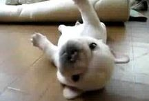Dog Videos / Watch our compilation of Dog Videos to find funny dogs, great dog stories and more! / by Best Bully Sticks