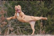 Funny Dogs / Simply funny dogs that we love.