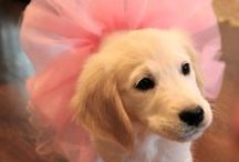 Puppies / A cute puppy can make you smile on even the worst days. Get your daily dose of puppy here!