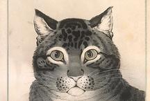 #Cat / Et pas que pour #caturday ;)