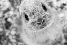 • Animalia • / It's ok to prefer animals to people. / by Elizabeth Harris