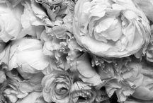 • Flora • / The earth laughs in flowers. / by Elizabeth Harris