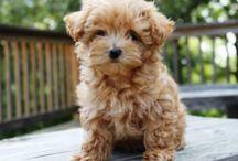 Puppy | love