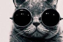 • Feline • / Cat hair is lonely person glitter. / by Elizabeth Harris