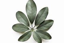 entropicalia / plant life