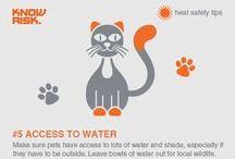 Heatwave Safety / Tips to get you through a heatwave.