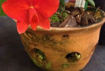 Orchid Pots / We are making some traditional style terracotta orchid pots