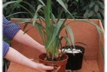 Orchid Information / Useful info on orchids and how to grow them