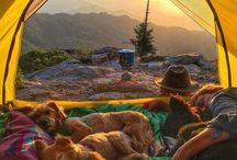 Adventures with Dogs / Hiking, backpacking, camping and outdoor adventures with dogs.