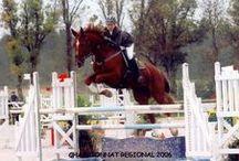 New Sense / Jument KWPN (cheval de selle hollandais) née en 1995, achetée aux Etats-Unis par Vanessa et rapatriée depuis 2006 en France.  Elle a eu une carrière sportive en concours complet et saut d'obstacles avant de débuter sa reconversion en poulinière il y a 4 ans maintenant. Elle nous a déjà donné deux magnifiques poulains : Vae Victis XY et Be Mylady Carthago XY.  Et nous espérons que la famille s'agrandira encore davantage…