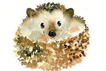 Hedgehogs!!!!!! / Hedgehogs!!! Because they are one of the cutest things to walk this earth and One day I will own one.