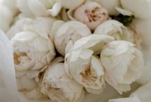 Une fleur pour moi / un fiore per me...