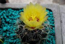 cactus y jardin / by Ire Jofré